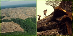 Deforestation is rapidly clearing Earth's forests.