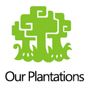 ourplantations